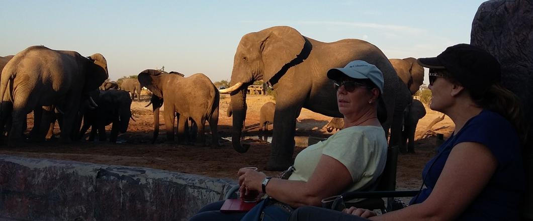 elephant sandds2