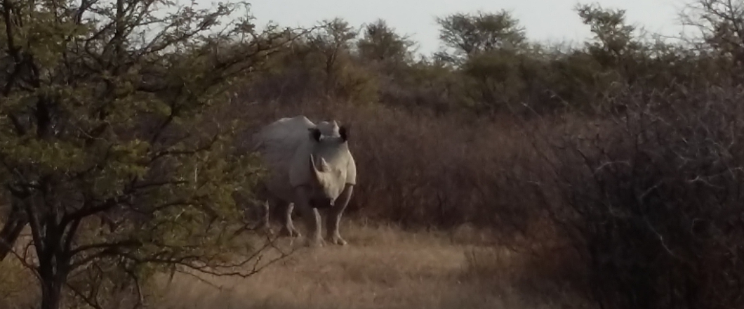 a rhino seen in khama Rhino Sanctuary